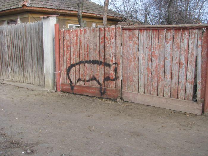 Ignat taierea porcului (1)