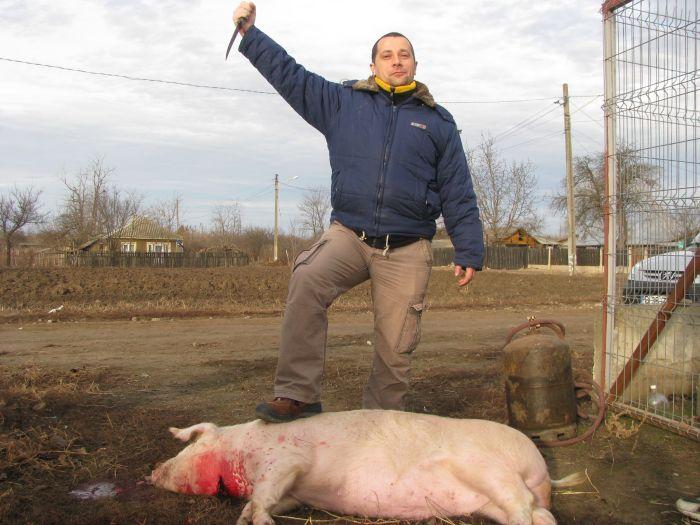 Ignat taierea porcului (4)