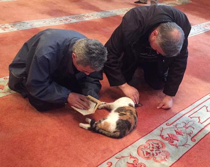 pisici in moschee (2)