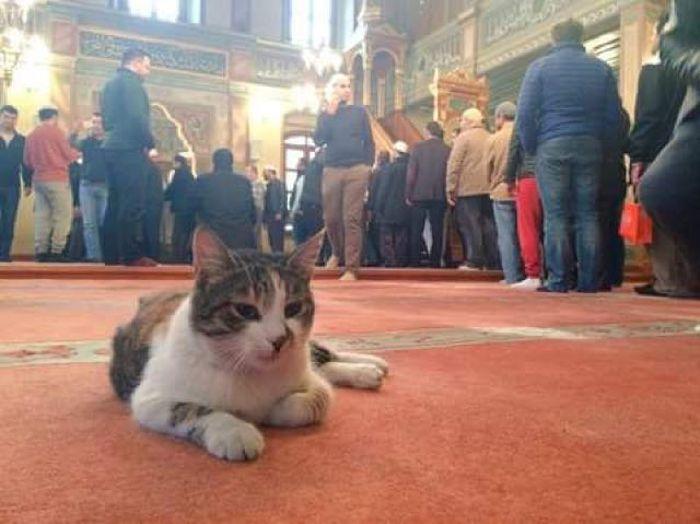 pisici in moschee (3)