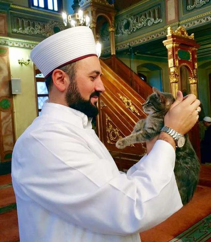 pisici in moschee (4)