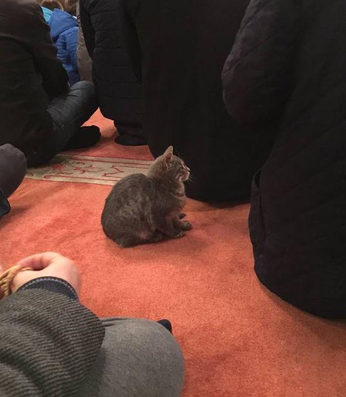 pisici in moschee (5)