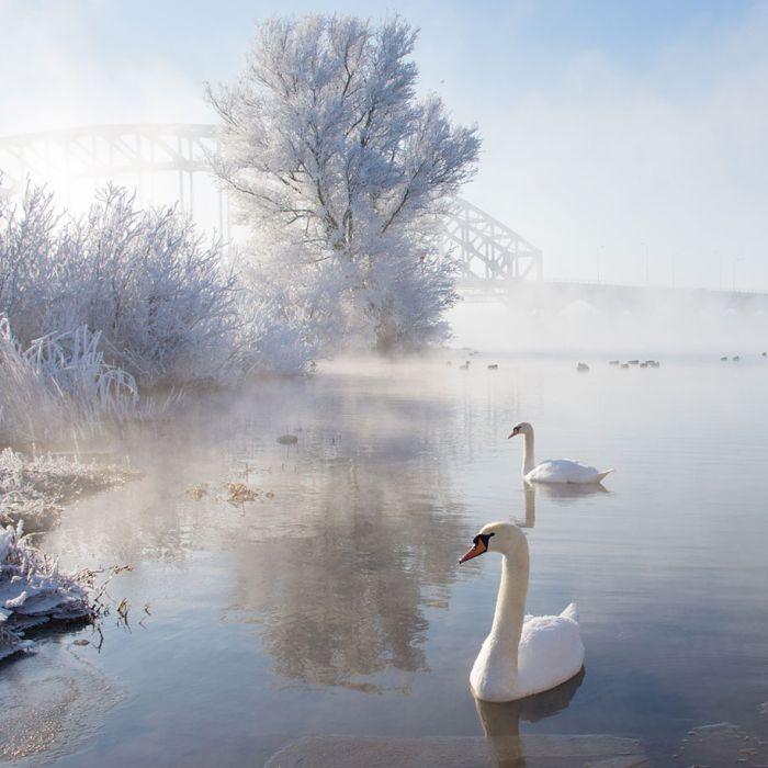 poze iarna (10)