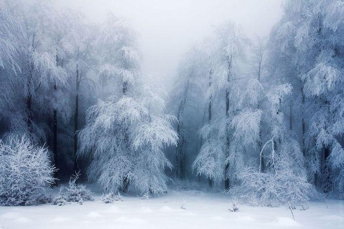 poze iarna (12)