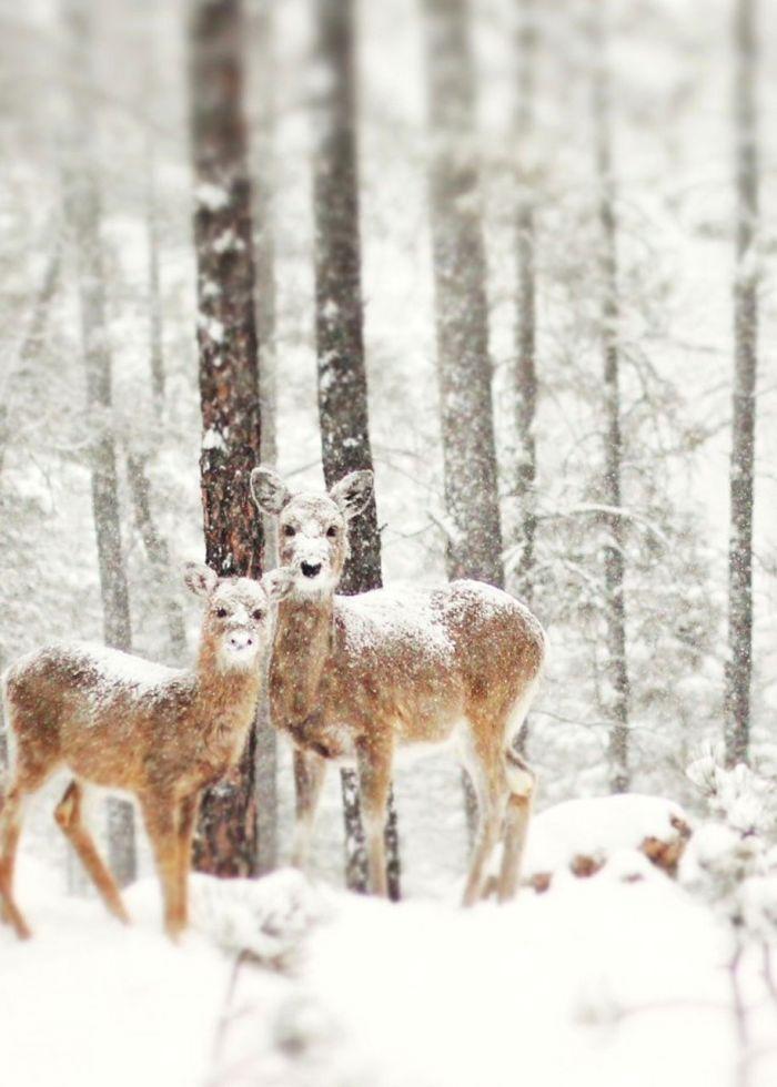 poze iarna (13)