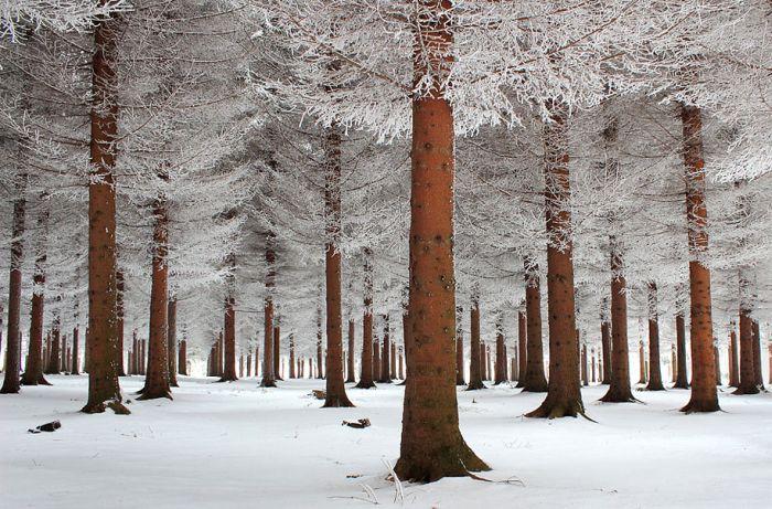 poze iarna (5)