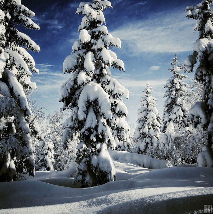 poze iarna (8)