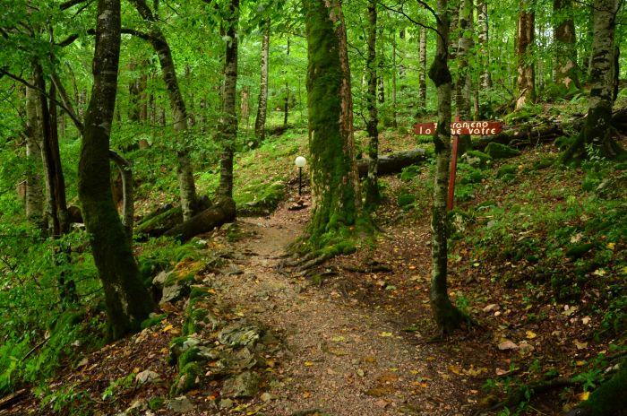 Park Biogradska Gora Muntenegru (1)