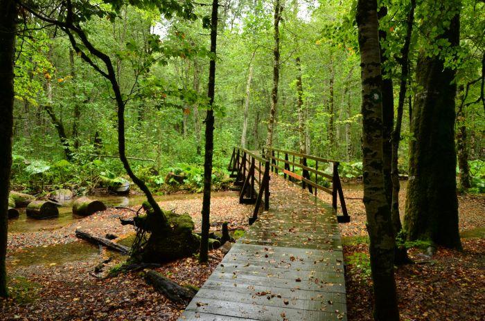 Park Biogradska Gora Muntenegru (11)