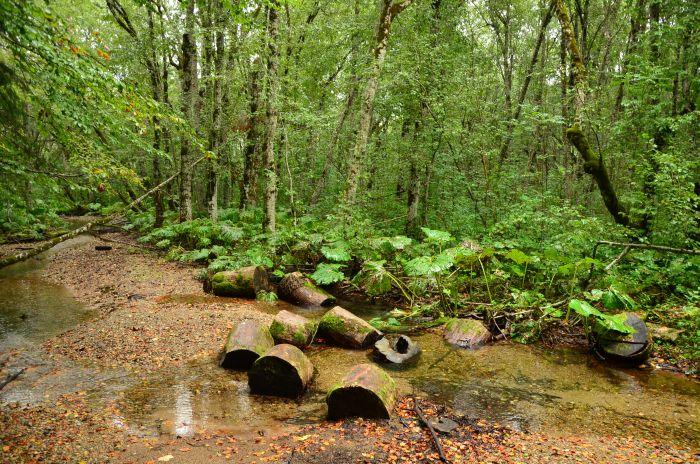Park Biogradska Gora Muntenegru (12)