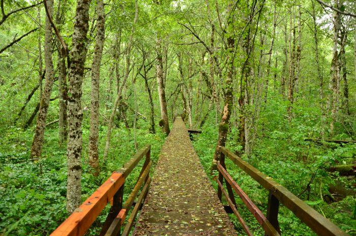Park Biogradska Gora Muntenegru (13)
