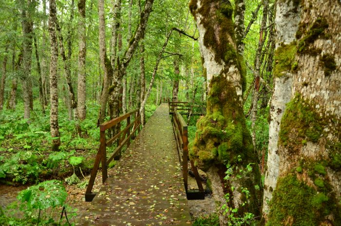 Park Biogradska Gora Muntenegru (14)