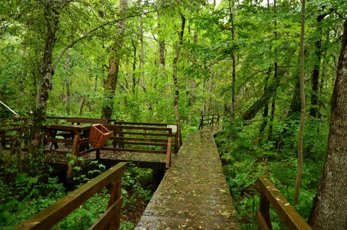 Park Biogradska Gora Muntenegru (16)