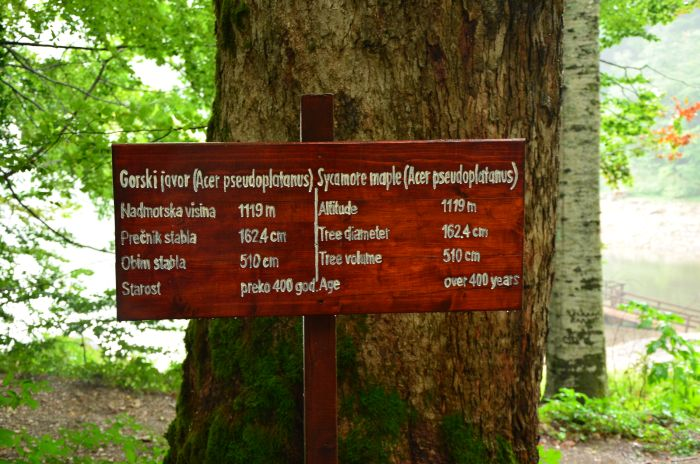 Park Biogradska Gora Muntenegru (19)