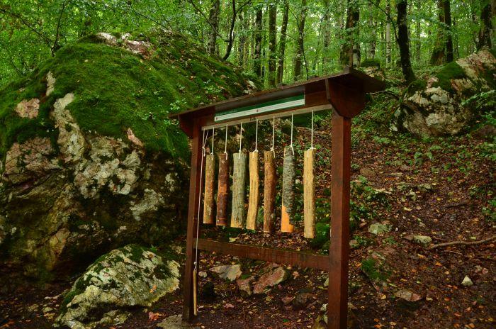 Park Biogradska Gora Muntenegru (2)