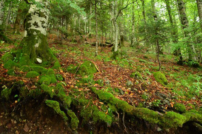 Park Biogradska Gora Muntenegru (3)