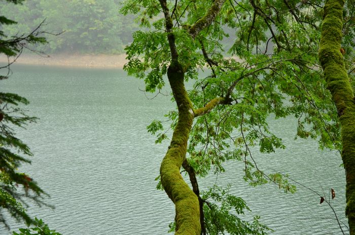 Park Biogradska Gora Muntenegru (4)