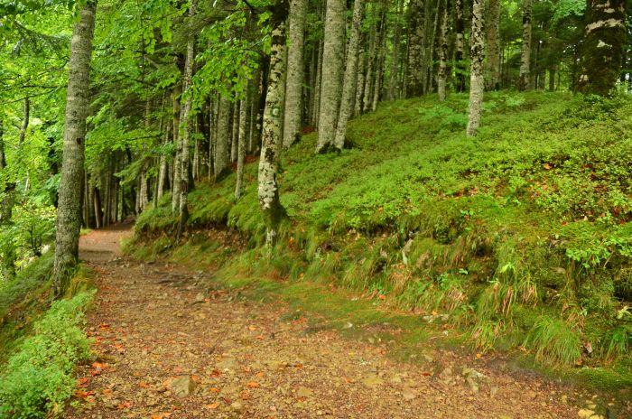 Park Biogradska Gora Muntenegru (6)