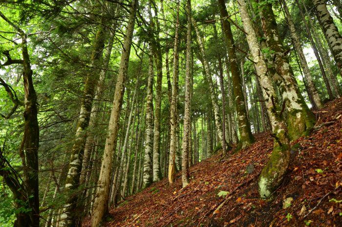Park Biogradska Gora Muntenegru (7)