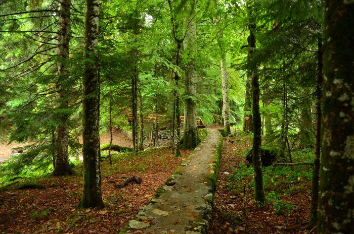 Park Biogradska Gora Muntenegru (9)