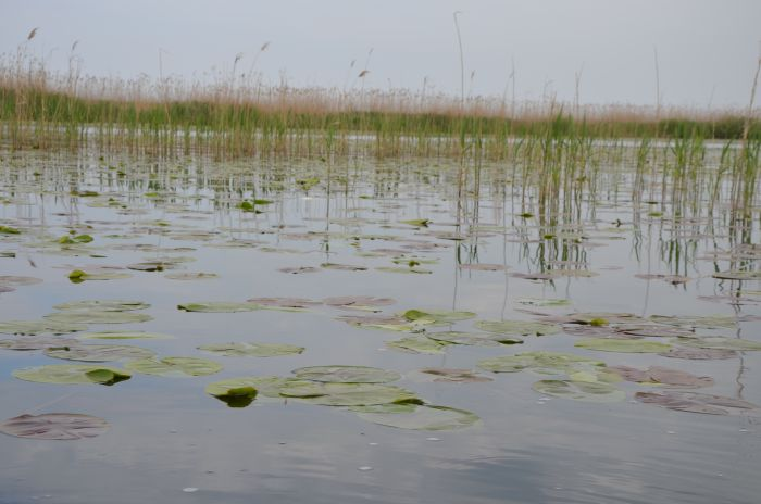 Delta Dunarii (10)