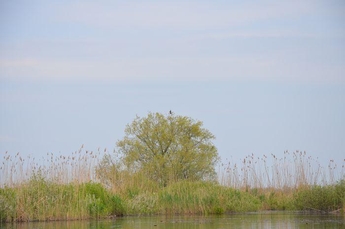 Delta Dunarii (12)
