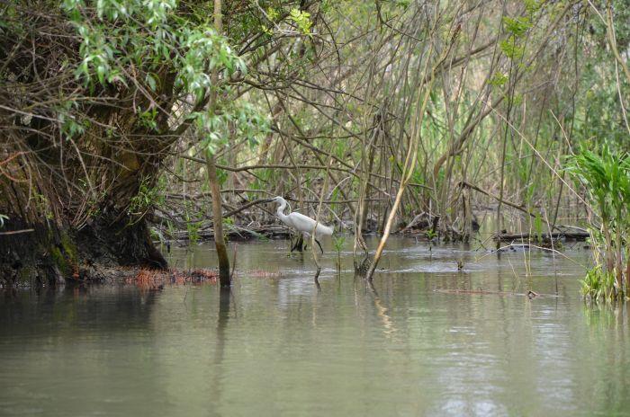 Delta Dunarii (5)