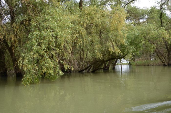 Delta Dunarii (6)