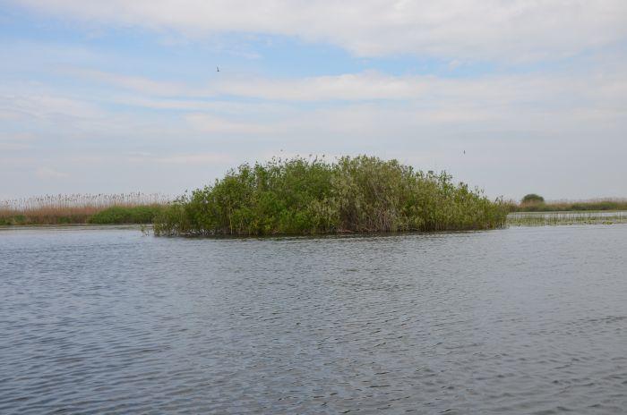 Delta Dunarii (8)