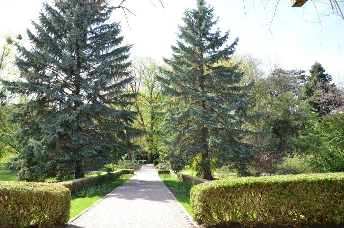 Gradina Botanica Cluj Napoca (18)