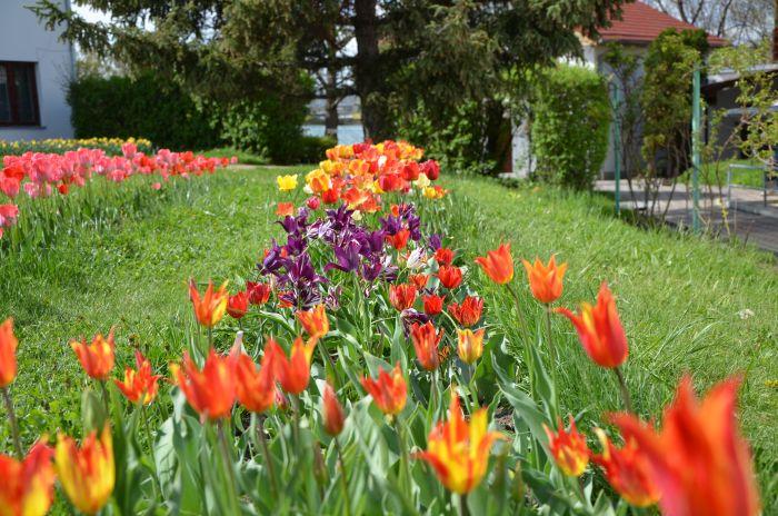 Gradina Botanica Cluj Napoca (7)