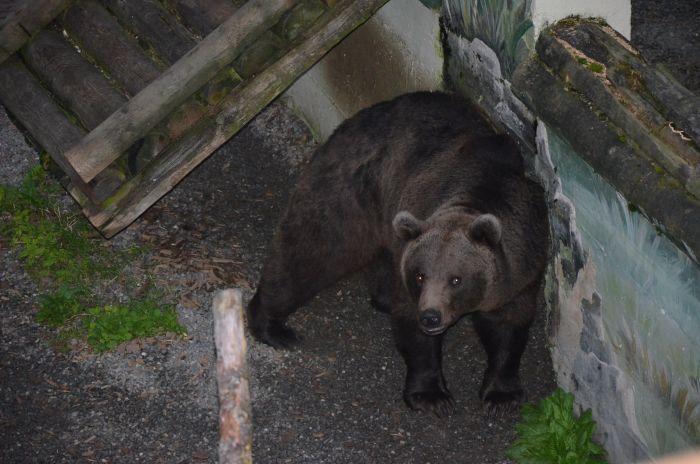 gradina zoo Alpi Austria (1)