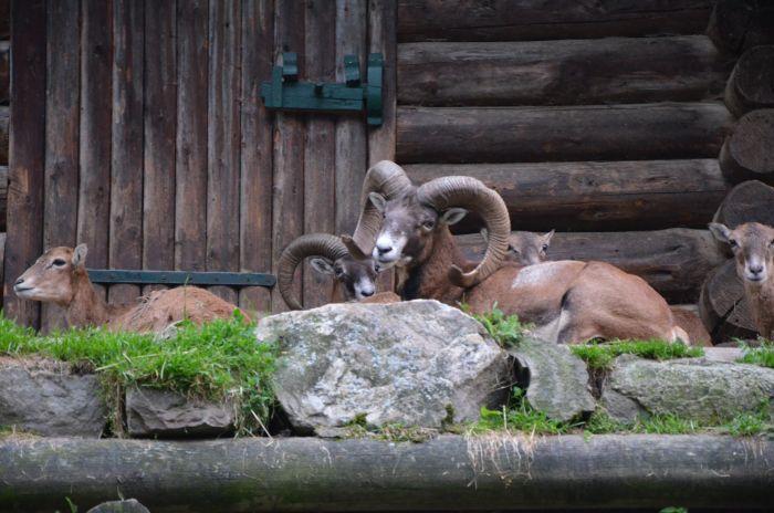 gradina zoo Alpi Austria (14)