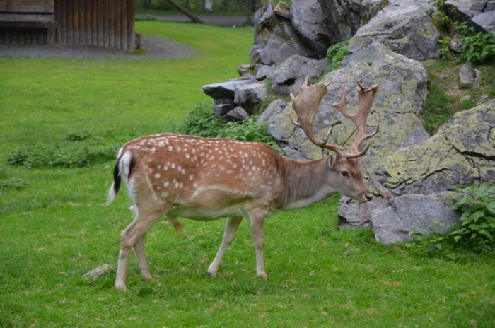 gradina zoo Alpi Austria (4)