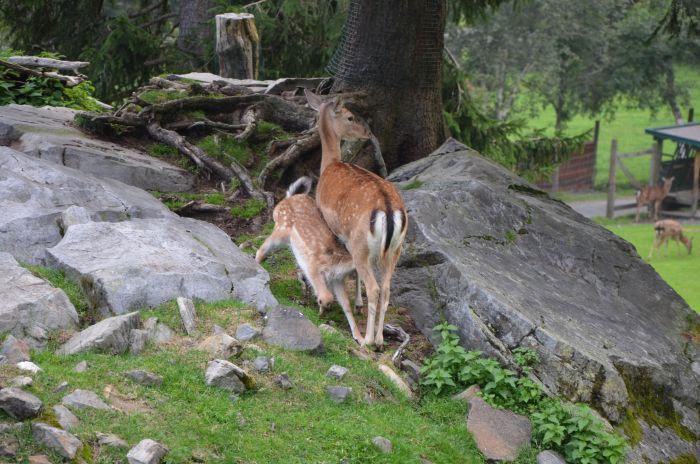 gradina zoo Alpi Austria (5)