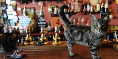 bar cu pisici