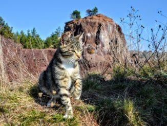 pisica la Vulcanul din Racos