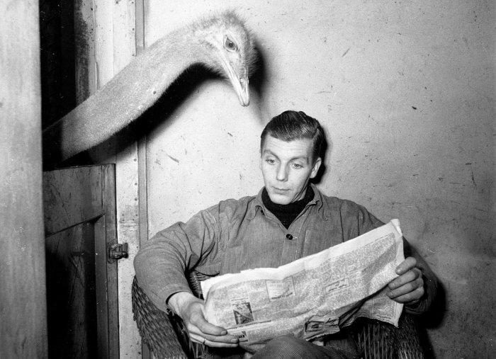 cititor ziar