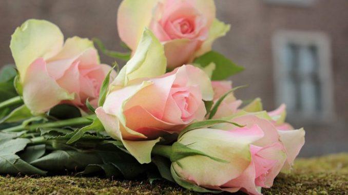 poze flori trandafiri