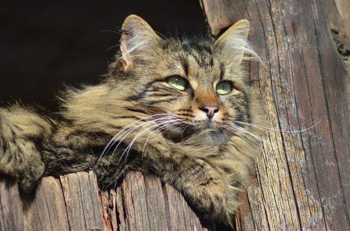 15-lucruri-pe-care-nu-le-stiai-despre-pisici
